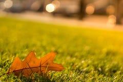 Hierba verde clara en el sol foto de archivo