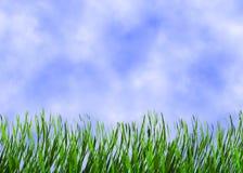 Hierba verde clara en fondos de un cielo azul Foto de archivo