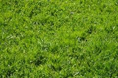 Hierba verde clara perfecta imagenes de archivo