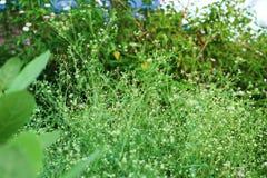 Hierba verde colorida con la flor imagen de archivo libre de regalías