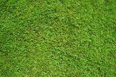 Hierba verde como fondo y textura Imágenes de archivo libres de regalías