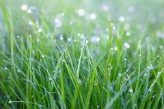 Hierba verde con descensos de rocío Foto de archivo libre de regalías