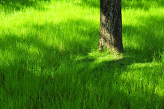 Hierba verde con el árbol el verano en parque bajo luz soleada Imágenes de archivo libres de regalías