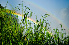 Hierba verde con el arco iris Foto de archivo libre de regalías