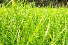 Hierba verde con el bosque en el fondo en un día soleado brillante fotografía de archivo