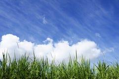 Hierba verde con el cielo asoleado azul Imagenes de archivo