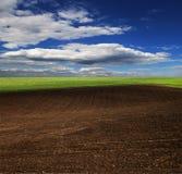 Hierba verde con el cielo azul brillante Fotos de archivo libres de regalías