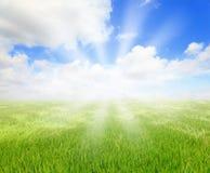 Hierba verde con el cielo azul y la sol hermosa imagen de archivo