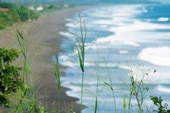 Hierba verde con el fondo borroso de la playa volcánica de la lava del negro del Océano Pacífico en Jaco, Costa Rica Imagenes de archivo