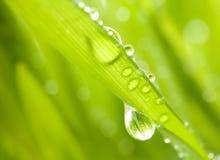Hierba verde con gotas de lluvia imagen de archivo