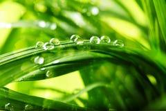 Hierba verde con gotas del agua Foto de archivo libre de regalías