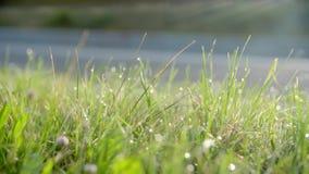 Hierba verde con gotas del rocío almacen de video