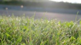 Hierba verde con gotas del rocío metrajes