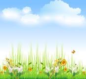 Hierba verde con las flores Imagen de archivo