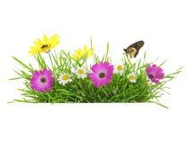 Hierba verde con las flores Imagen de archivo libre de regalías