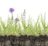 Hierba verde con las flores Fotos de archivo