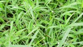 Hierba verde con las gotas de agua metrajes