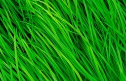 Hierba verde con las hojas largas Fondo verde natural de la textura de la hierba de los tallos Fondo orgánico y sano Fondo Imagen de archivo