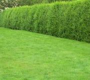 Hierba verde con los setos Foto de archivo