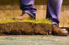 Hierba verde con los zapatos Fotos de archivo libres de regalías