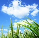 Hierba verde, concepto de la protección del medio ambiente del desarrollo Fotografía de archivo libre de regalías