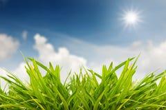 Hierba verde contra salida del sol Imagen de archivo