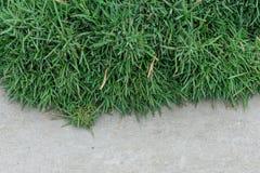 Hierba verde contra un hormigón gris Fotografía de archivo libre de regalías