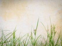 Hierba verde contra una pared Fotografía de archivo