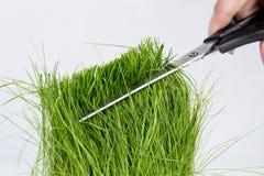 Hierba verde cortada con las tijeras Imagenes de archivo