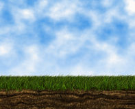 Hierba verde creciente brillante en fondos de un cielo azul Imagen de archivo libre de regalías