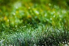 Hierba verde cubierta de rocio, fondo borroso Imagenes de archivo