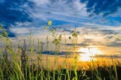 Hierba verde cubierta de rocio fresca en la salida del sol Imágenes de archivo libres de regalías