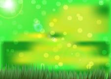 Hierba verde de Beaytiful con las luces del sol Fotografía de archivo