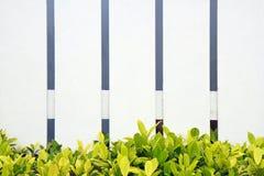 Hierba verde de la cerca blanca Imagenes de archivo