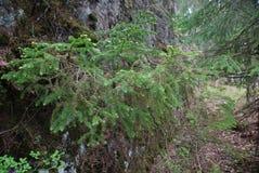 Hierba verde de la foto Imagen de archivo