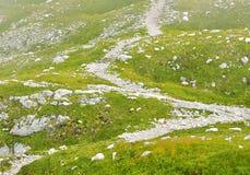 Hierba verde de la manera blanca de la trayectoria del senderismo de la montaña Imagenes de archivo