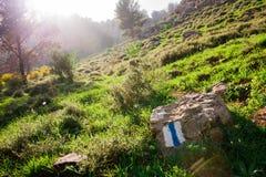 Hierba verde de la naturaleza con salida del sol Imagen de archivo