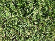 Hierba verde de la textura Imagen de archivo libre de regalías