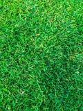 Hierba verde de la visión superior en la echada o el campo de fútbol del fútbol Foto de archivo libre de regalías