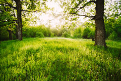 Hierba verde de Sunny Deciduous Forest Trees And del verano La naturaleza, corteja imagen de archivo
