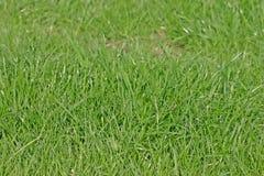 Hierba verde de un césped de Cheshire Imagen de archivo libre de regalías