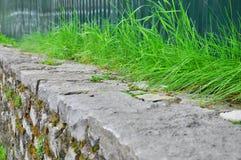 Hierba verde debajo de la cerca fotos de archivo libres de regalías