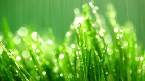 Hierba verde debajo de la lluvia almacen de metraje de vídeo