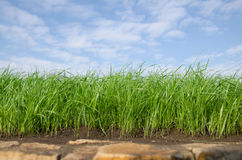 Hierba verde debajo del cielo azul Imagenes de archivo