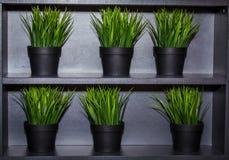 Hierba verde decorativa Fotos de archivo