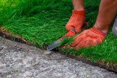 Hierba verde del césped en rollos Foto de archivo libre de regalías