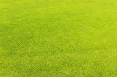 Hierba verde del campo del golf Imágenes de archivo libres de regalías