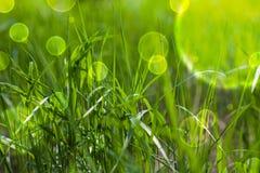Hierba verde del cuento de hadas Imagenes de archivo