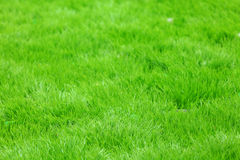 Hierba verde del nuevo resorte foto de archivo libre de regalías
