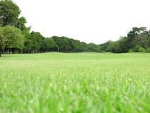 Hierba verde del paisaje Foto de archivo libre de regalías